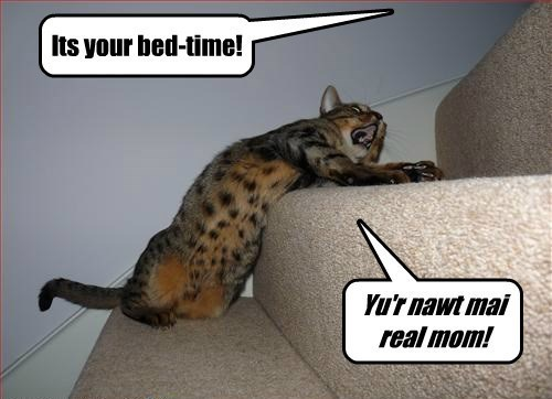 Cat - Its your bed-time! Yu'r nawt mai real mom!
