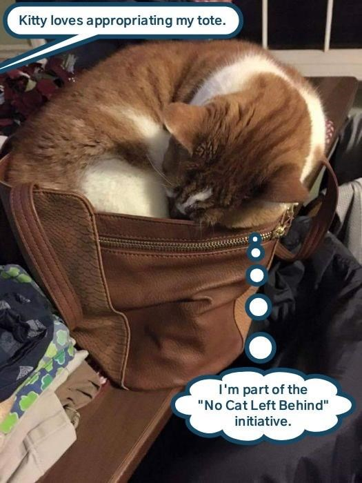 """lolcats - Cat - Kitty loves appropriating my tote. I'm part of the """"No Cat Left Behind"""" initiative."""
