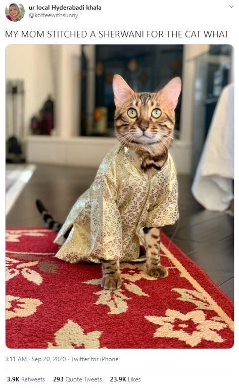 Cat - ur local Hyderabadi khala @koffeewithsunny MY MOM STITCHED A SHERWANI FOR THE CAT WHAT 3:11 AM - Sep 20, 2020 - Twitter for iPhone 3.9K Retweets 293 Quote Tweets 23.9K Likes >