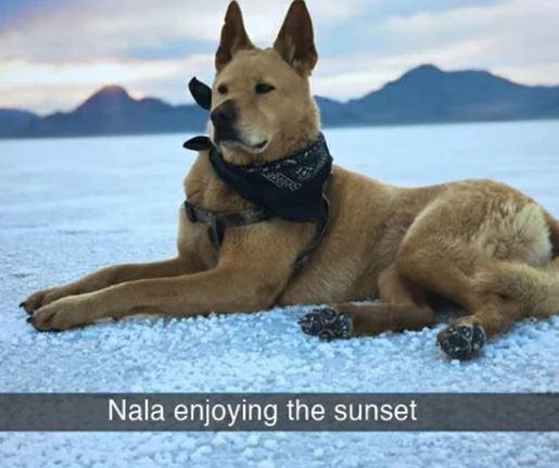 Mammal - Nala enjoying the sunset