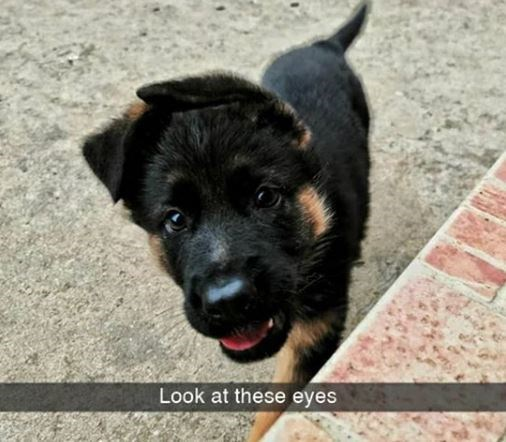Dog - Look at these eyes