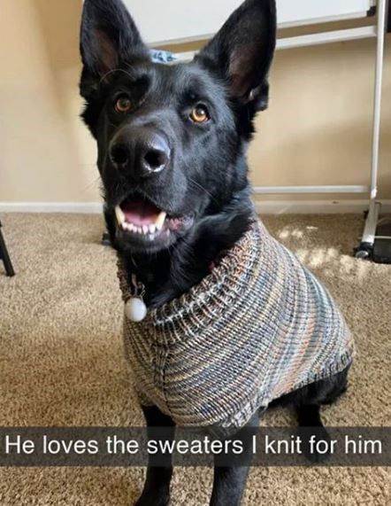 Vertebrate - He loves the sweaters I knit for him