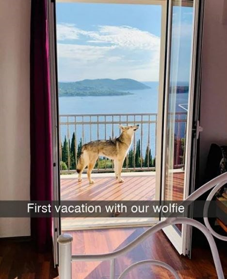 Property - First vacation with our wolfie
