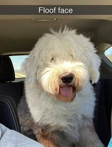 Dog - Floof face