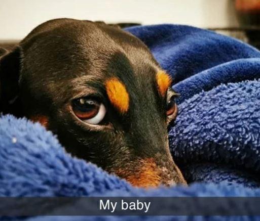 Dog - My baby