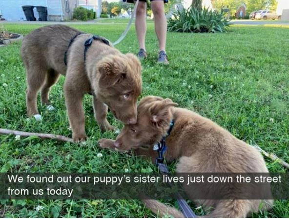 Mammal - We found out our puppy's sister lives just down the street from us today