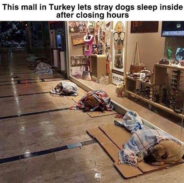 This mall in Turkey lets stray dogs sleep inside after closing hours row of dogs sleeping on cardboard pieces covered in blankets