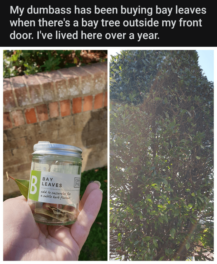 Tree - My dumbass has been buying bay leaves when there's a bay tree outside my front door. I've lived here over a year. BAY LEAVES EMSS add to casseroles for a subtle kerb flaroue