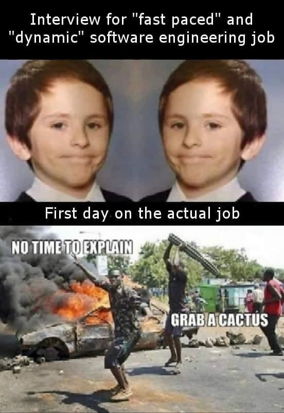 """Photo caption - Interview for """"fast paced"""" and """"dynamic"""" software engineering job First day on the actual job NO TIME TO EXPLAIN GRAB A CACTUS"""