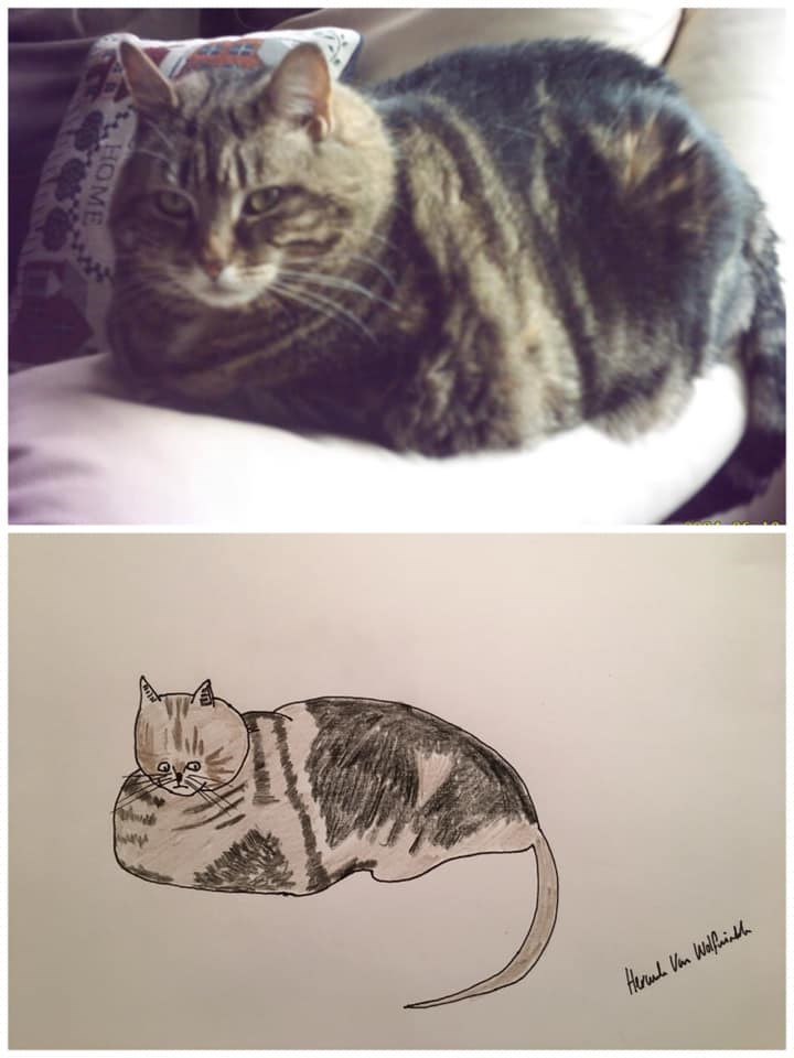 Cat - Heruh Van Walfninddh HOME