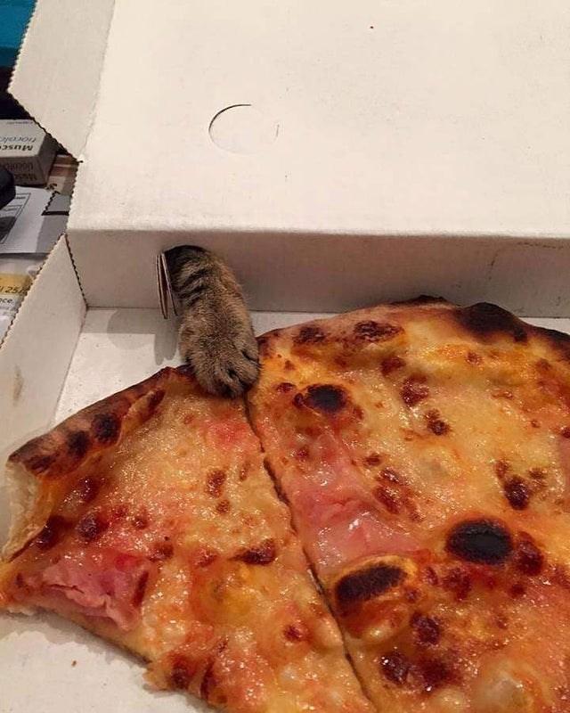 Pizza - Liocoto 25 oce