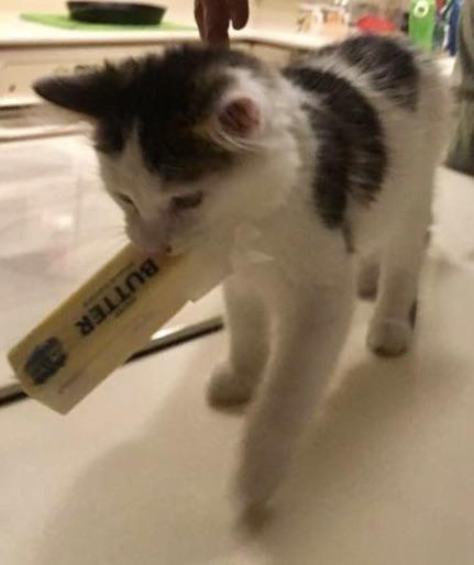 Cat - BUTTER