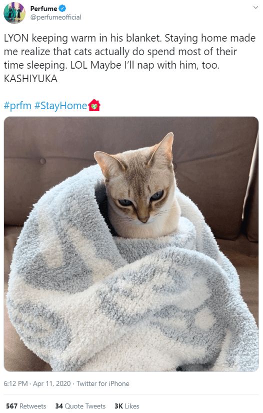 Cat - Perfume @perfumeofficial LYON keeping warm in his blanket. Staying home made me realize that cats actually do spend most of their time sleeping. LOL Maybe l'll nap with him, too. KASHIYUKA #prfm #StayHome 6:12 PM · Apr 11, 2020 · Twitter for iPhone 567 Retweets 34 Quote Tweets 3K Likes