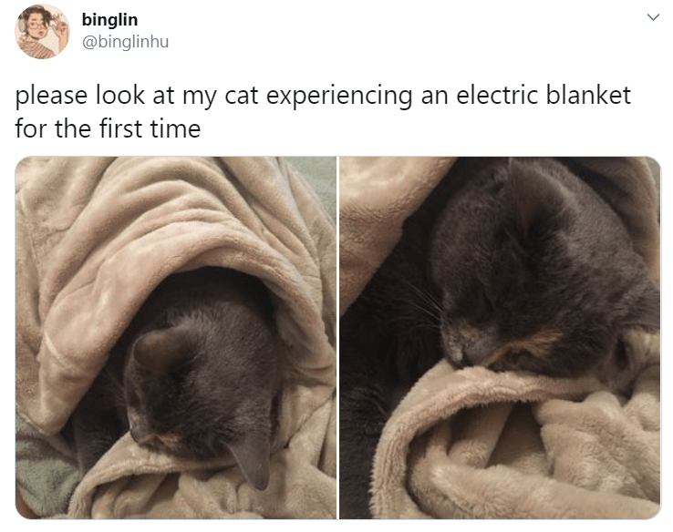 Sphynx - binglin @binglinhu please look at my cat experiencing an electric blanket for the first time