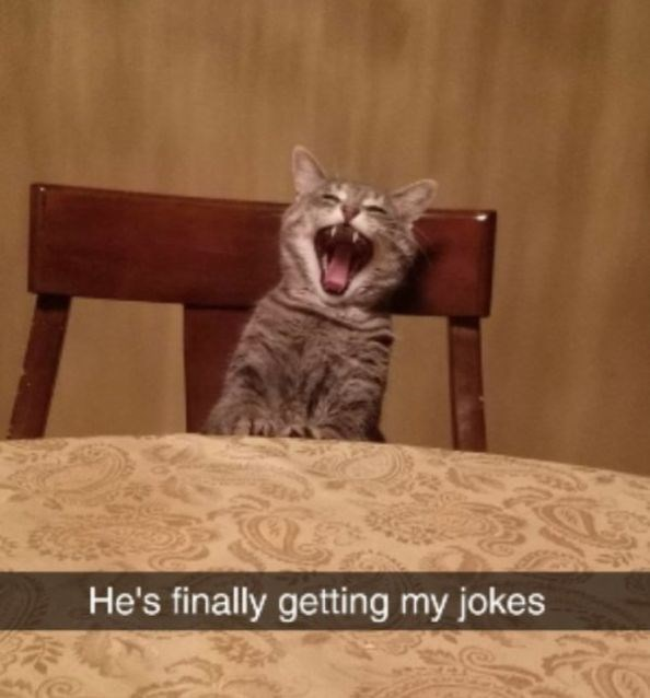 Cat - He's finally getting my jokes