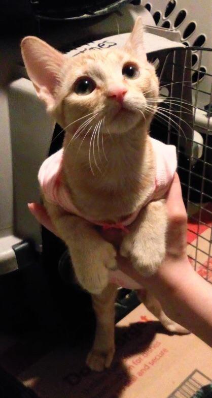 Cat - for ois