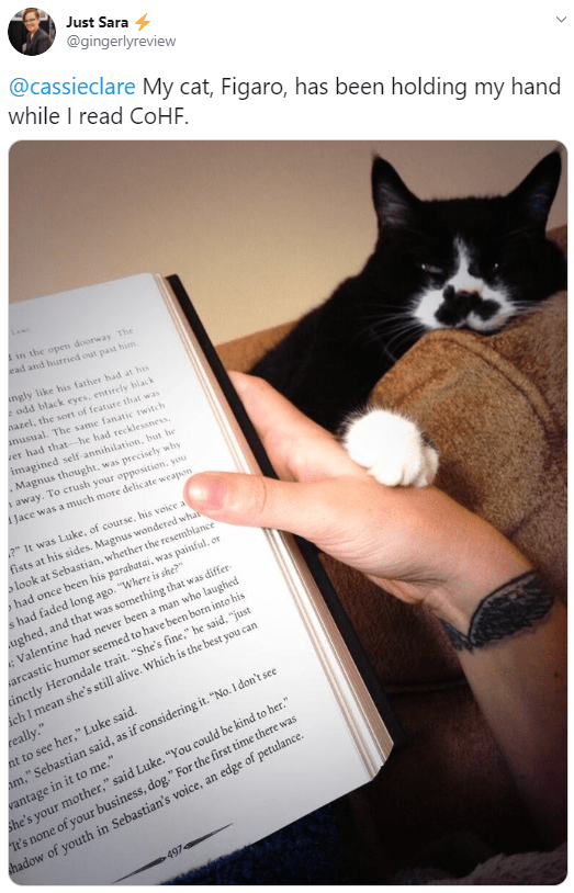 Cat - Just Sara 4 @gingerlyreview @cassieclare My cat, Figaro, has been holding my hand while I read COHE. Ain the open doorway The kad and hurried out past him ngly like his father had at his odd black eyes, entirely black nazel, the sort of featute that was anusual. The same fanatic twitch rer had that-he had recklessness. imagined self-annihilation, but he Magnus thought, was precisely why A away. To crush your opposition, you AJace was a much more delicate weapon 2 It was Luke, of course, hi