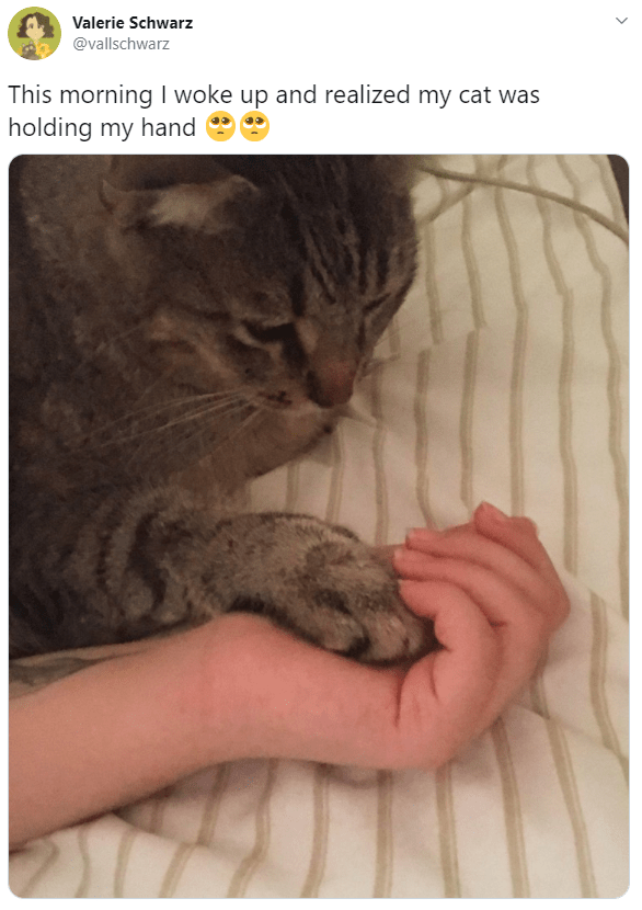 Cat - Valerie Schwarz @vallschwarz This morning I woke up and realized my cat was holding my hand