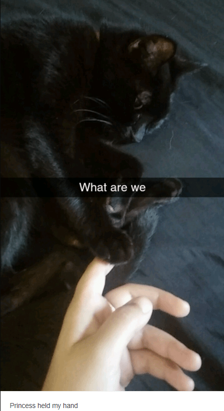 Cat - What are we Princess held my hand