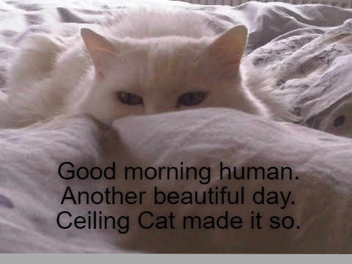 lolcats - Cat - Good morning human. Another beautiful day. Ceiling Cat made it so. so.