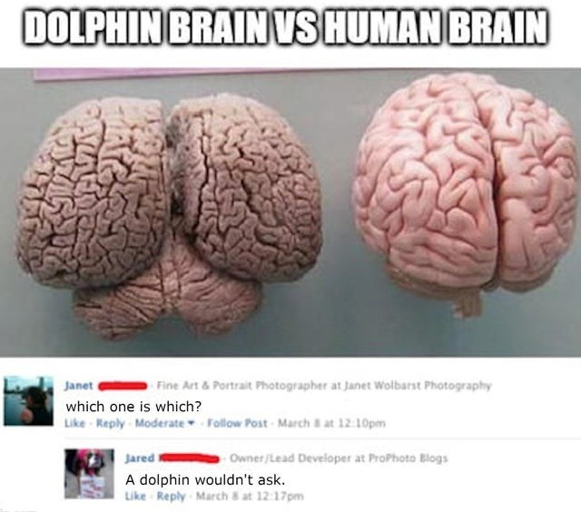 Brain - DOLPHIN BRAIN VS HUMAN BRAIN Janet Fine Art & Portrait Photographer at Janet Wolbarst Photography which one is which? Like - Reply Moderate Follow Post - March at 12:10pm Jared Owner/Lead Developer at ProPhoto Blogs A dolphin wouldn't ask. Like Reply March 8 at 12:17pm