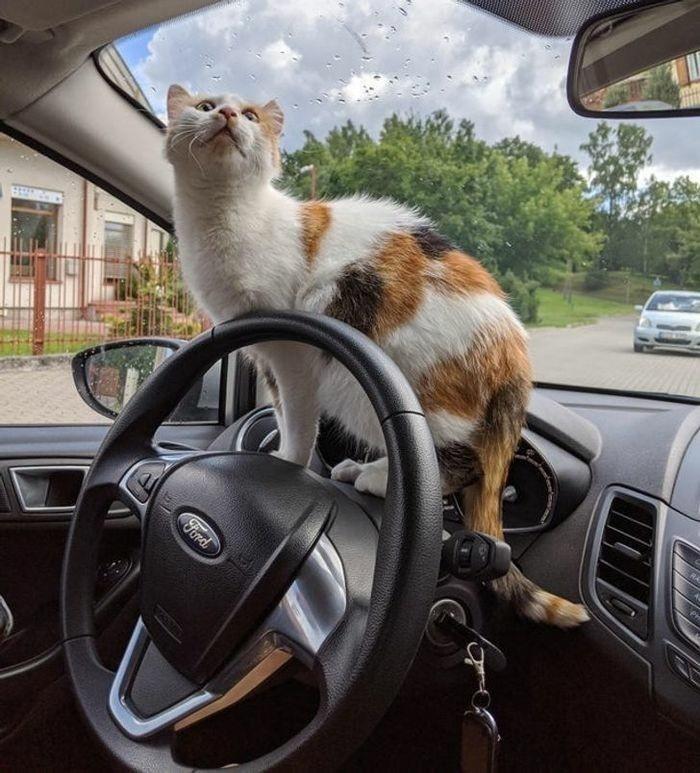 Steering wheel - Ford