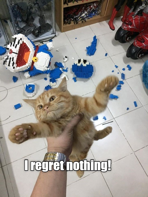 lolcats - Cat - Oregret nothing!