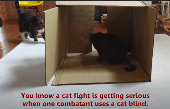 lolcats - Cat - You know a cat fight is getting serious when one combatant uses a cat blind.