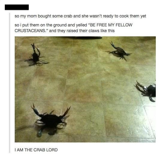 """Insect - so my mom bought some crab and she wasn't ready to cook them yet so i put them on the ground and yelled """"BE FREE MY FELLOW CRUSTACEANS."""" and they raised their claws like this I AM THE CRAB LORD"""