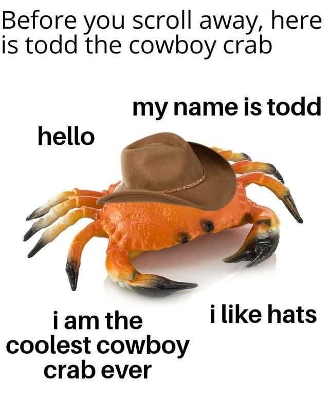 Rock crab - Before you scroll away, here is todd the cowboy crab my name is todd hello i like hats i am the coolest cowboy crab ever