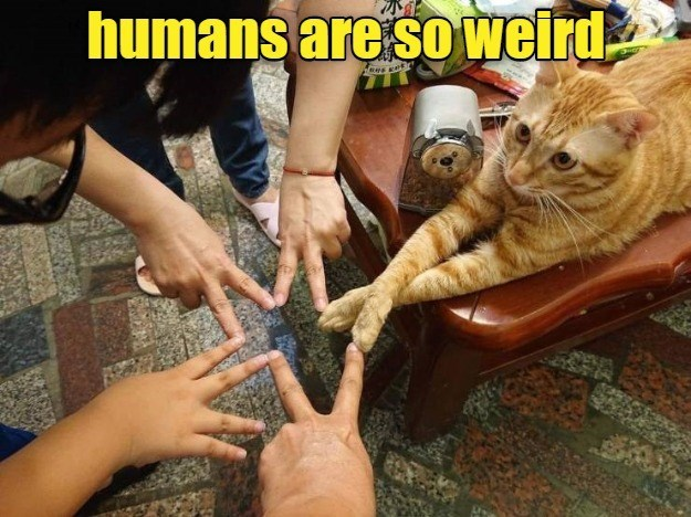 lolcats - Cat - humans are so weird