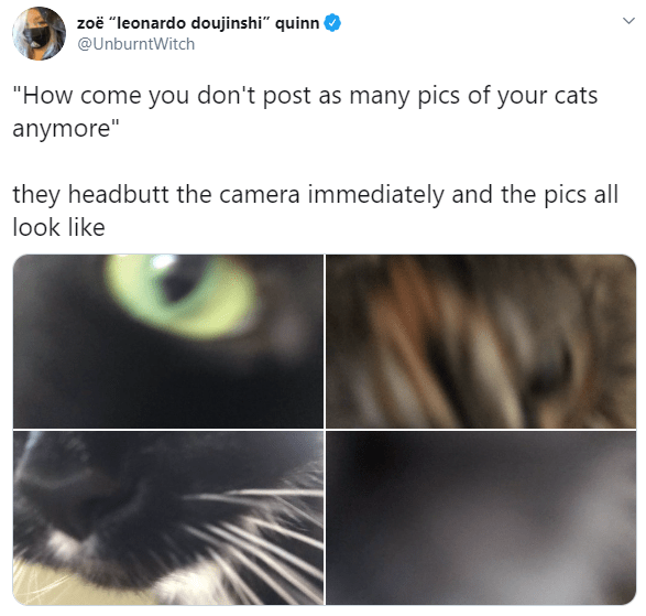 """Text - zoë """"leonardo doujinshi"""" quinn @UnburntWitch """"How come you don't post as many pics of your cats anymore"""" they headbutt the camera immediately and the pics all look like"""