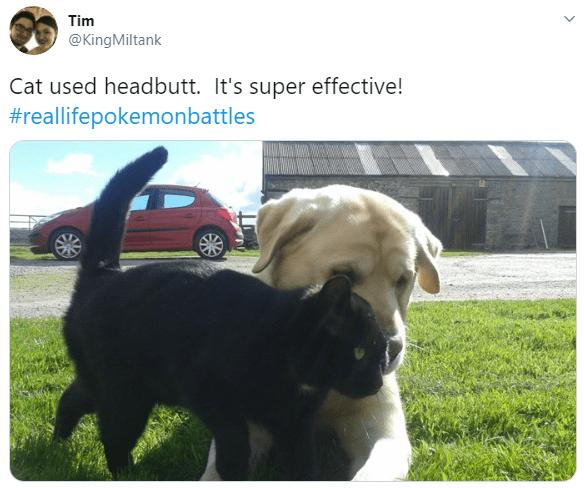 Dog - Tim @KingMiltank Cat used headbutt. It's super effective! #reallifepokemonbattles
