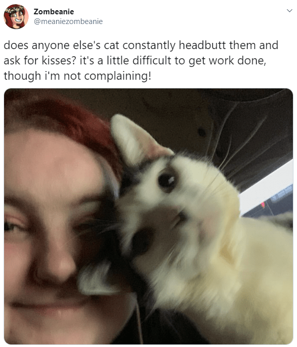 Nose - Zombeanie @meaniezombeanie does anyone else's cat constantly headbutt them and ask for kisses? it's a little difficult to get work done, though i'm not complaining!