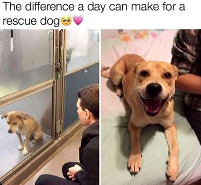 The difference a day can make for a rescue dog | sad dog behind a cage and same dog smiling happily