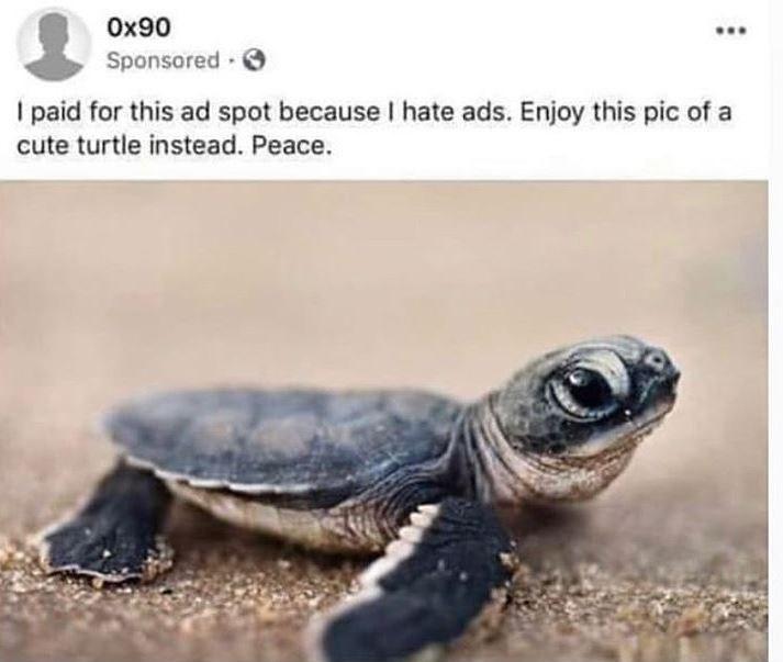 turtle - 9554748416