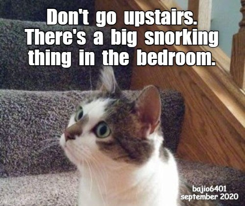 lolcats - Cat - Don't go upstairs. There's a big snorking thing in the bedroom. bajio6401 september 2020