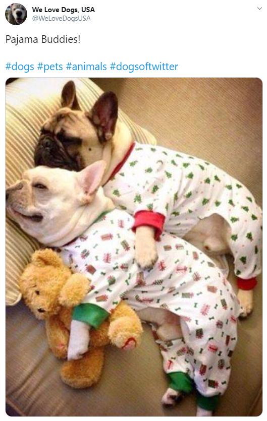 French bulldog - We Love Dogs, USA @WeLoveDogsUSA Pajama Buddies! #dogs #pets #animals #dogsoftwitter