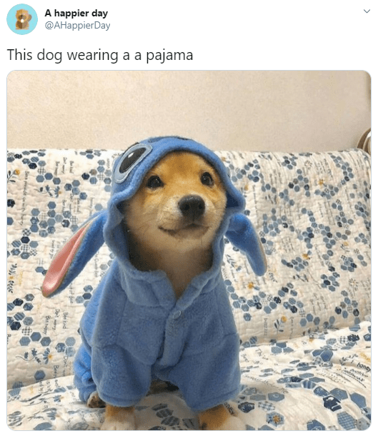 Dog - A happier day ФАНарpierDay This dog wearing a a pajama honey