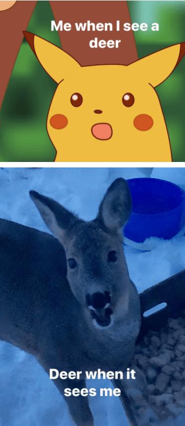 Kangaroo - Me when I see a deer Deer when it sees me