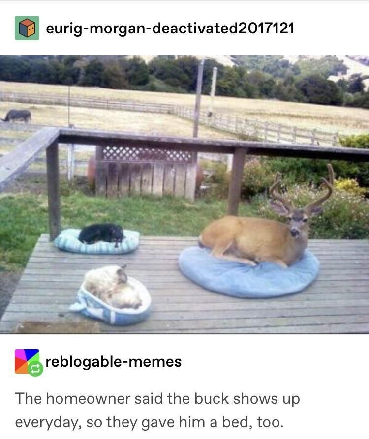 Wildlife - eurig-morgan-deactivated2017121 reblogable-memes The homeowner said the buck shows up everyday, so they gave him a bed, too.