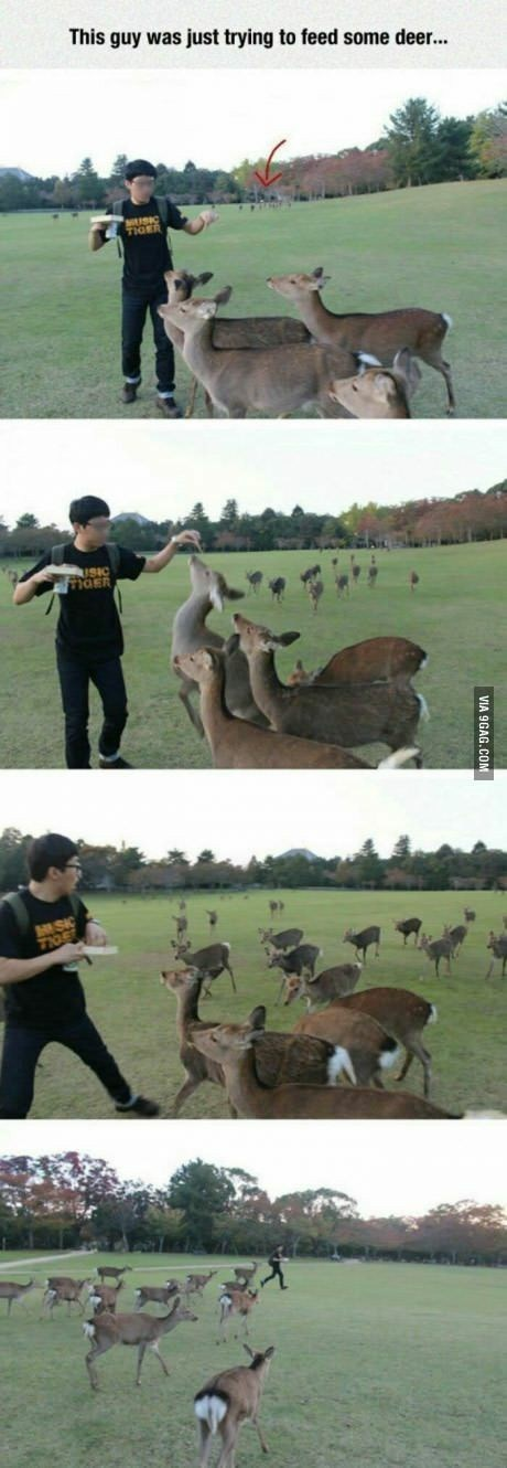 Wildlife - This guy was just trying to feed some deer... TIGE MOER MISIC 7106 VIA 9GAG.COM