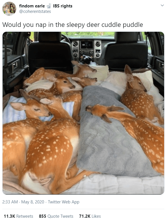 Organism - findom earle IBS rights @coherentstates Would you nap in the sleepy deer cuddle puddle 2:33 AM - May 8, 2020 · Twitter Web App 11.3K Retweets 855 Quote Tweets 71.2K Likes IEO