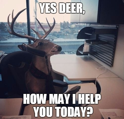 Deer - YES DEER, HOW MAY I HELP YOU TODAY?