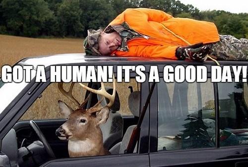 Wildlife - GOTA HUMAN! ITSA GOOD DAY!