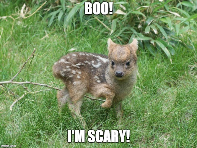 Vertebrate - BOO! I'M SCARY! imgfilip.com