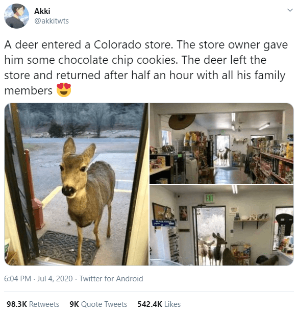 Website - Akki @akkitwts A deer entered a Colorado store. The store owner gave him some chocolate chip cookies. The deer left the store and returned after half an hour with all his family members EXIT 6:04 PM · Jul 4, 2020 - Twitter for Android 98.3K Retweets 9K Quote Tweets 542.4K Likes