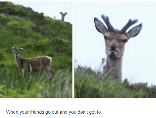 Wildlife - When your friends go out and you don't get to