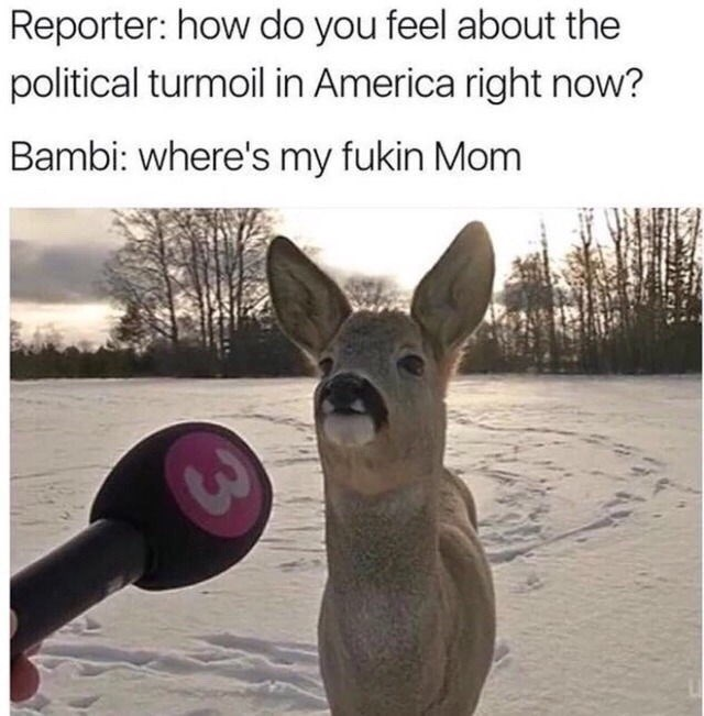 Kangaroo - Reporter: how do you feel about the political turmoil in America right now? Bambi: where's my fukin Mom