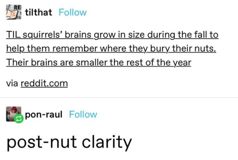 Text - RE tilthat Follow TIL squirrels' brains grow in size during the fall to help them remember where they bury their nuts. Their brains are smaller the rest of the year via reddit.com pon-raul Follow post-nut clarity